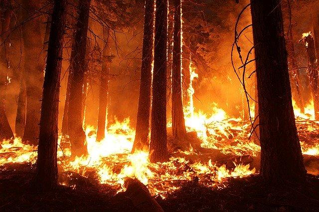 Campagna antincendio boschivo - Prescrizioni e divieti